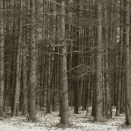 imgp7477-trees_2.jpg