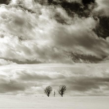 three-trees4.jpg