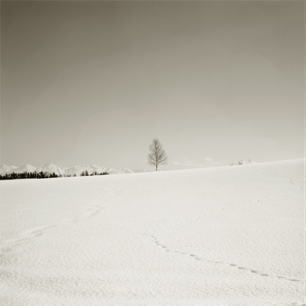 biei_tree.jpg
