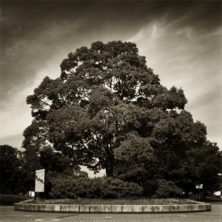 tegapark_tree.jpg