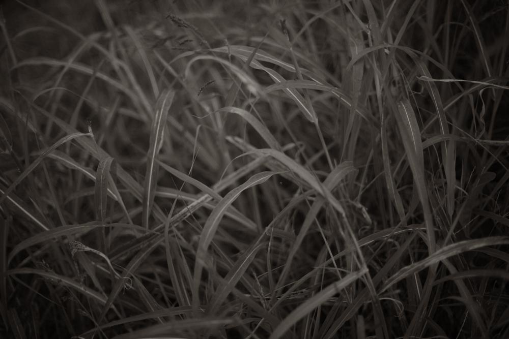 江戸川に生えてた草