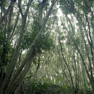 deep_forest_at_shirahama